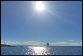 Lac Titicaca arbre seul