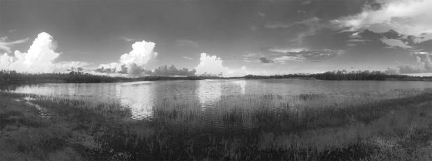 Everglades,N&B